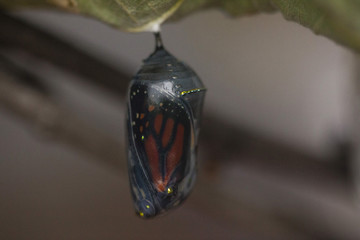 Close-up of cocoon hanging on plant stem