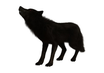 3D Rendering Black Wolf on White