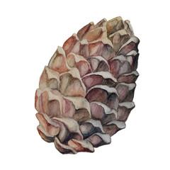 pine cones watercolor