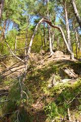 Mountain of fallen trees