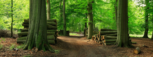 Piles of Lumber along Dirt Road through Green Forest