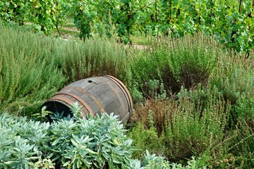Old wine barrel
