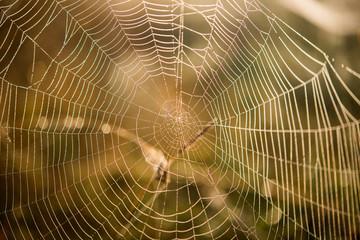 Spider net Macro Spiderweb