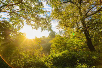 Beautiful morning sun rays in autumn forest. Present artistic ef