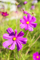 Purple flower in the meadow