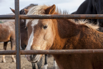 Small pony behind fence.