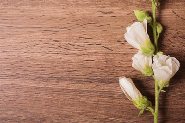 White flowers on a wooden background. Place for printing for text, for design. Flat lay