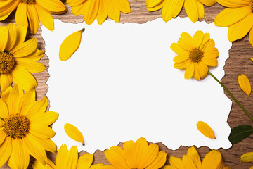 White paper on the wooden background. Yellow summer flowers and petals on the table. The creative atmosphere, conceptual photography.