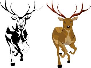 2 Deer image illustration, vector illustration on white background