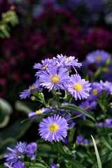 Colors flowers III