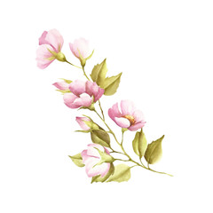 The flowers of wild rose. Watercolor illustration.