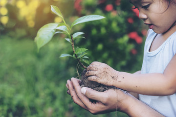 Hands growing a young plant / protect nature and environment con Wall mural