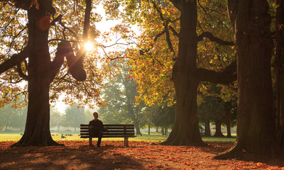 Man sitting on a bench in a park on a sunny autumn morning. Wall mural