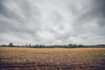 Corn crops on a field in the fall