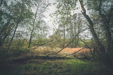Fallen tree in autumn landscape