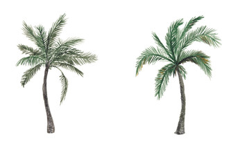 Set of Watercolor painting palm trees isolated on white background