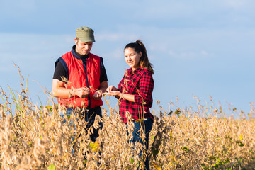 Farmers in soybean fields before harvest