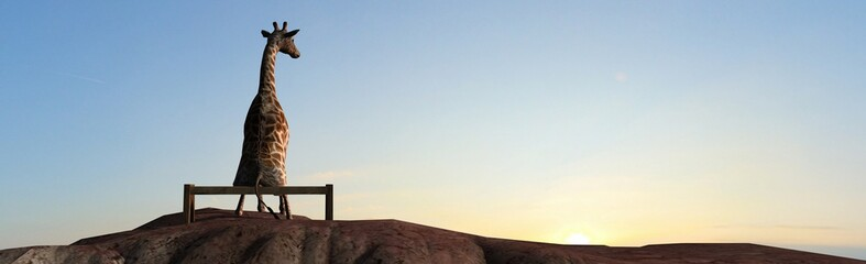 Giraffe  on a mountain top sit on a bench at sunset
