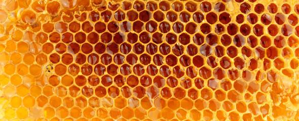Honey Bee Wax Honeycomb