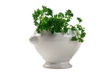 parsley in a vase