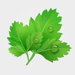 Vector fresh leaves of parsley