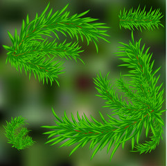 Christmas tree. Green blurred background. Twigs. Vector illustration .