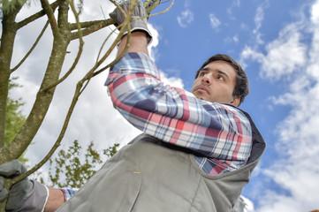 Upward view of gardener next to tree