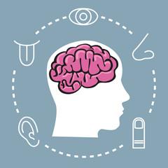 5 sens - Cerveau - symbole