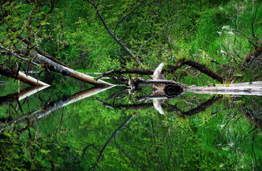 Abstracts of Nature Reflections in still water