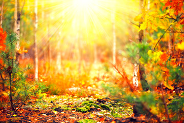 Fototapete - Autumn sunny forest. Blurred abstract nature background