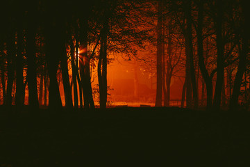 Gloomy autumnal desolate park in the fog at night Wall mural