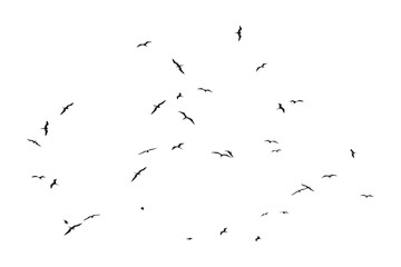Group of Birds Silhouettes Flying Isolated