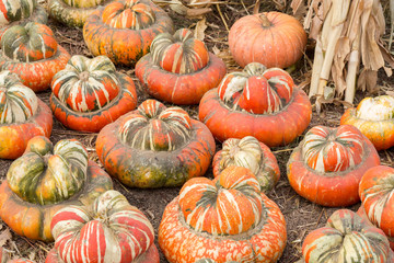 "Turban Squash in a Pumpkin Patch in Northern California. Turban squash, also known as ""Turk's turban"" or ""French turban"" (""Giraumon"" in French), is a type of squash most often used as a winter squash."