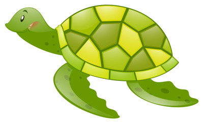 Green turtle on white background