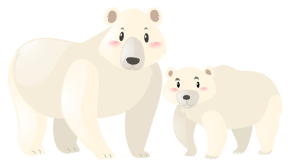 Two polar bears on white background