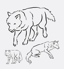Wolf walking pose hand drawing. good use for symbol, logo, web icon, mascot, sign, sticker, element, object, or any design you want.