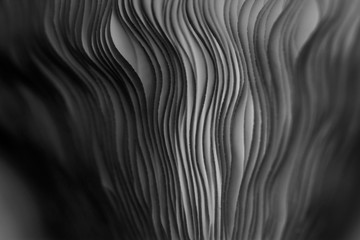 Close up of gills of a mushroom for abstract background