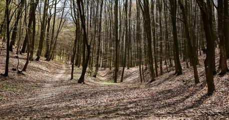 Keuken foto achterwand Bos in mist Forest in autumn