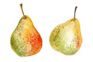 Pears painted with watercolors on white background. Colored juicy fruit on paper
