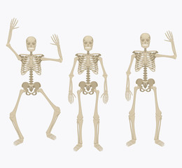 Human skeleton. Silhouette skeleton in different positions.
