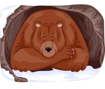 Grizzly Bear Hibernate