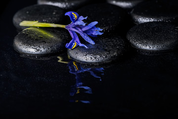 beautiful spa concept of blooming iris flower and black zen ston