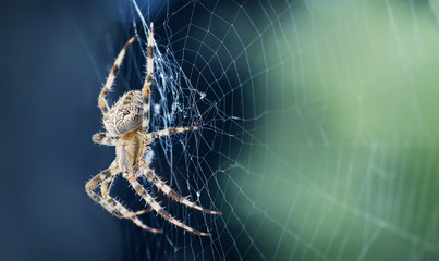 Close up of a spider in a web