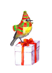 Bird in winter hat, scarf. Christmas gift box. Watercolour