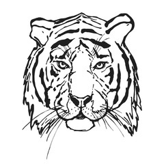 Tiger. Head. Wild animal. The logo for your design. Hand drawn.