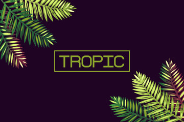 """Background with palm leaves and the word """"tropic"""". Lettering. Tropics. Border. Exotics."""