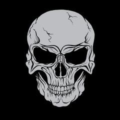 Vector skull head.