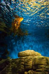 fish in oceanarium in blue depth water