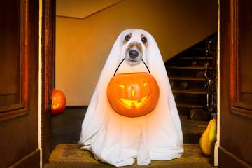 Printed roller blinds Crazy dog halloween ghost dog trick or treat