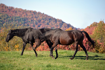 Brown young horse in field in fall